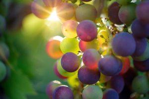 Read more about the article 5 יינות איריים ששווה לנסות